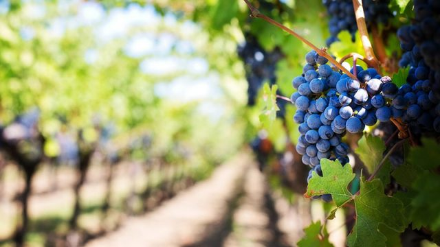 maryland wineries association a non profit trade association