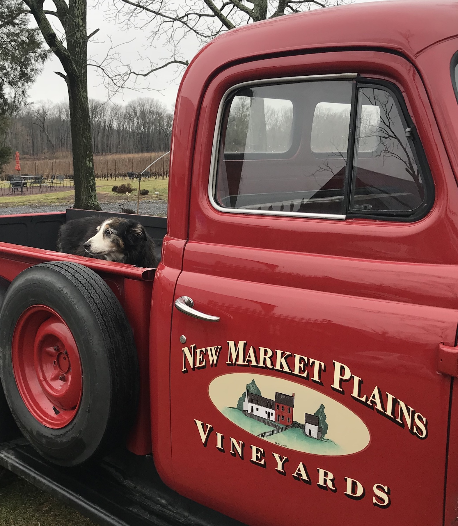New Market Plains Vineyards
