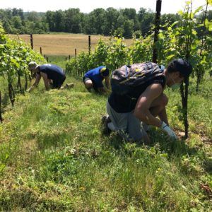 Maintaining the Vines