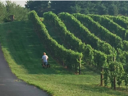 Pretty cool start: New winery wins Governor's Cup for Maryland's best wine
