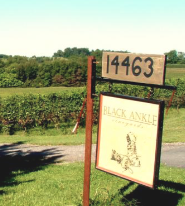 """With two new farms, Mount Airy's Black Ankle Vineyards prepares for big expansion"" – Baltimore Business Journal"