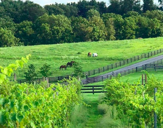 Hidden Hills Farm and Vineyard galloping toward its first birthday