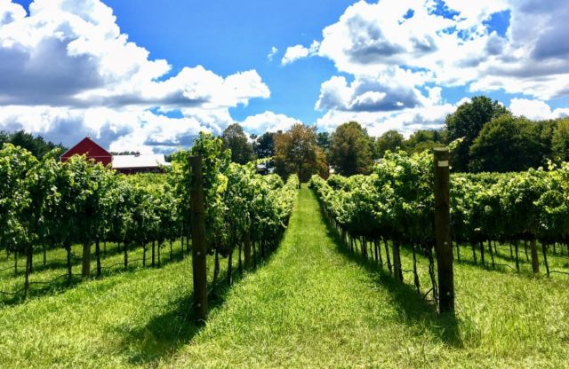 Support & Buy Maryland Wine!