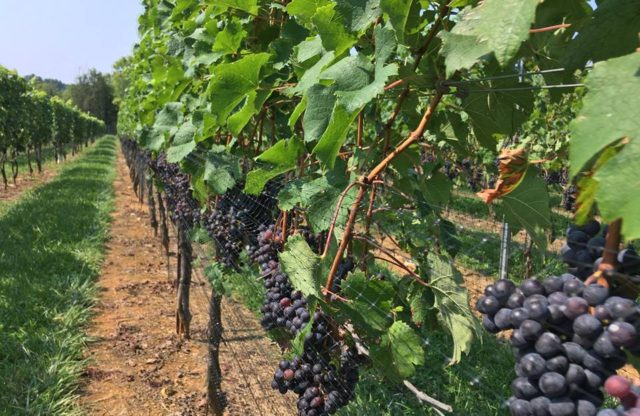 """Wine Industry Well-Equipped to Meet Climate Change Challenges"" – Wine Industry Network"