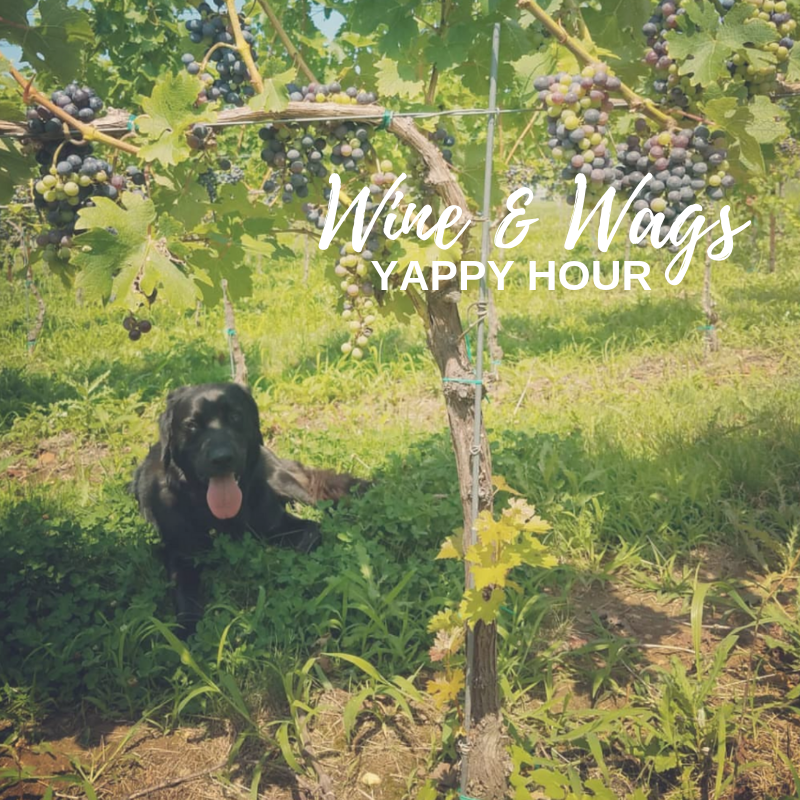 Wine & Wags | Yappy Hour!