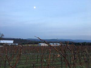 Dusk over the vineyard at ACV