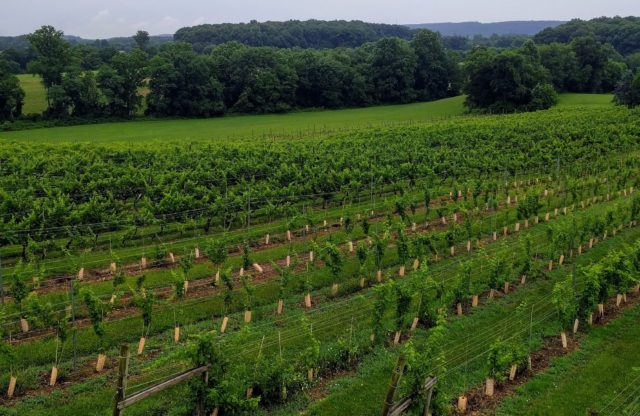 """'Old-guard' Maryland winery evolving with new grapes, more spirits"" – Penn Live"
